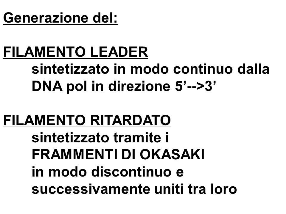 Generazione del: FILAMENTO LEADER sintetizzato in modo continuo dalla DNA pol in direzione 5-->3 FILAMENTO RITARDATO sintetizzato tramite i FRAMMENTI