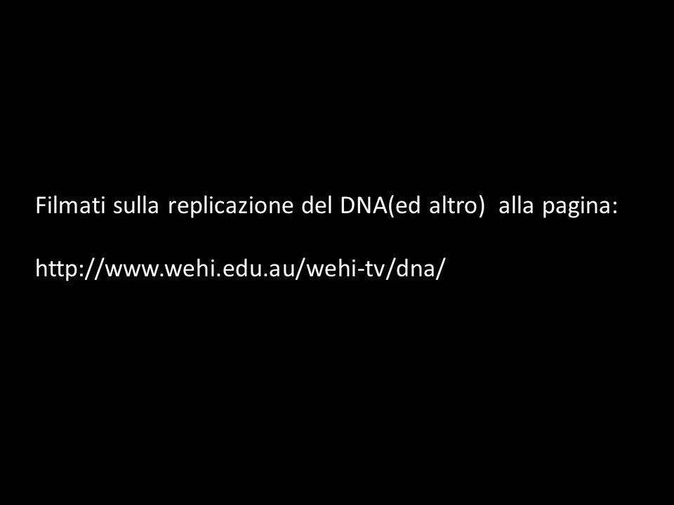 Filmati sulla replicazione del DNA(ed altro) alla pagina: http://www.wehi.edu.au/wehi-tv/dna/