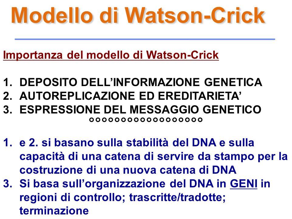 Modello di Watson-Crick Importanza del modello di Watson-Crick 1.DEPOSITO DELLINFORMAZIONE GENETICA 2.AUTOREPLICAZIONE ED EREDITARIETA 3.ESPRESSIONE D