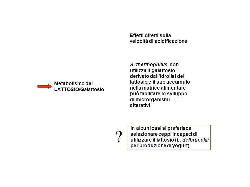 Metabolismo del LATTOSIO/Galattosio Effetti diretti sulla velocità di acidificazione S. thermophilus non utilizza il galattosio derivato dallidrolisi