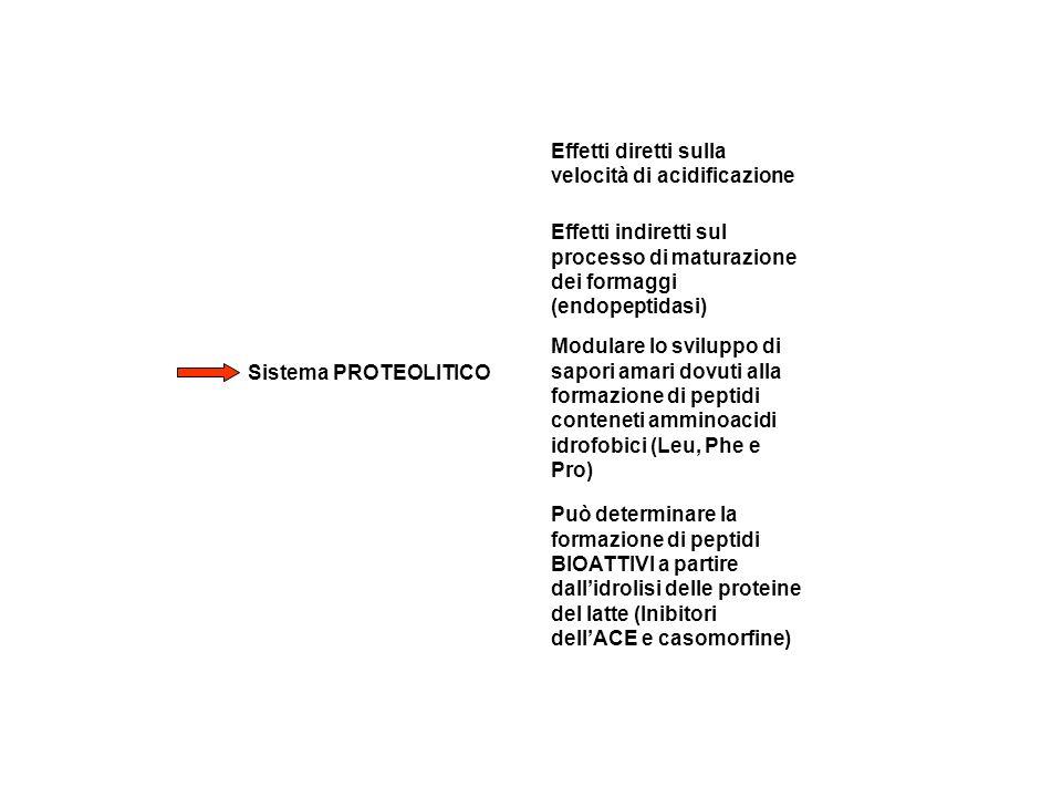 Sistema PROTEOLITICO Effetti diretti sulla velocità di acidificazione Effetti indiretti sul processo di maturazione dei formaggi (endopeptidasi) Può determinare la formazione di peptidi BIOATTIVI a partire dallidrolisi delle proteine del latte (Inibitori dellACE e casomorfine) Modulare lo sviluppo di sapori amari dovuti alla formazione di peptidi conteneti amminoacidi idrofobici (Leu, Phe e Pro)
