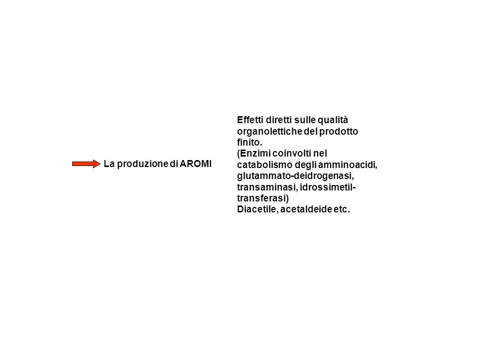La produzione di AROMI Effetti diretti sulle qualità organolettiche del prodotto finito. (Enzimi coinvolti nel catabolismo degli amminoacidi, glutamma