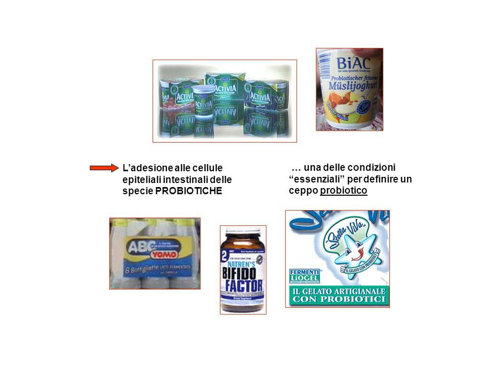 Ladesione alle cellule epiteliali intestinali delle specie PROBIOTICHE … una delle condizioni essenziali per definire un ceppo probiotico