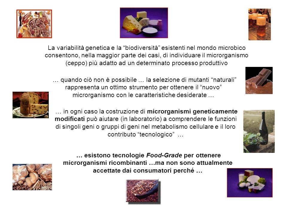 La variabilità genetica e la biodiversità esistenti nel mondo microbico consentono, nella maggior parte dei casi, di individuare il microrganismo (ceppo) più adatto ad un determinato processo produttivo … quando ciò non è possibile … la selezione di mutanti naturali rappresenta un ottimo strumento per ottenere il nuovo microrganismo con le caratteristiche desiderate … … in ogni caso la costruzione di microrganismi geneticamente modificati può aiutare (in laboratorio) a comprendere le funzioni di singoli geni o gruppi di geni nel metabolismo cellulare e il loro contributo tecnologico … … esistono tecnologie Food-Grade per ottenere microrganismi ricombinanti …ma non sono attualmente accettate dai consumatori perché …