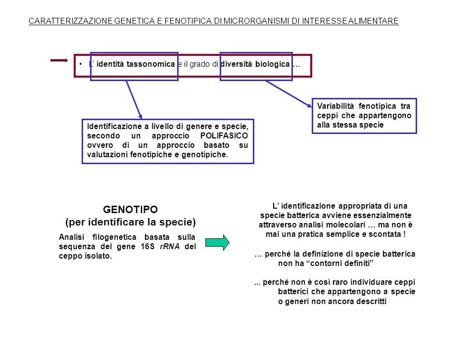 L identità tassonomica e il grado di diversità biologica … CARATTERIZZAZIONE GENETICA E FENOTIPICA DI MICRORGANISMI DI INTERESSE ALIMENTARE Identifica