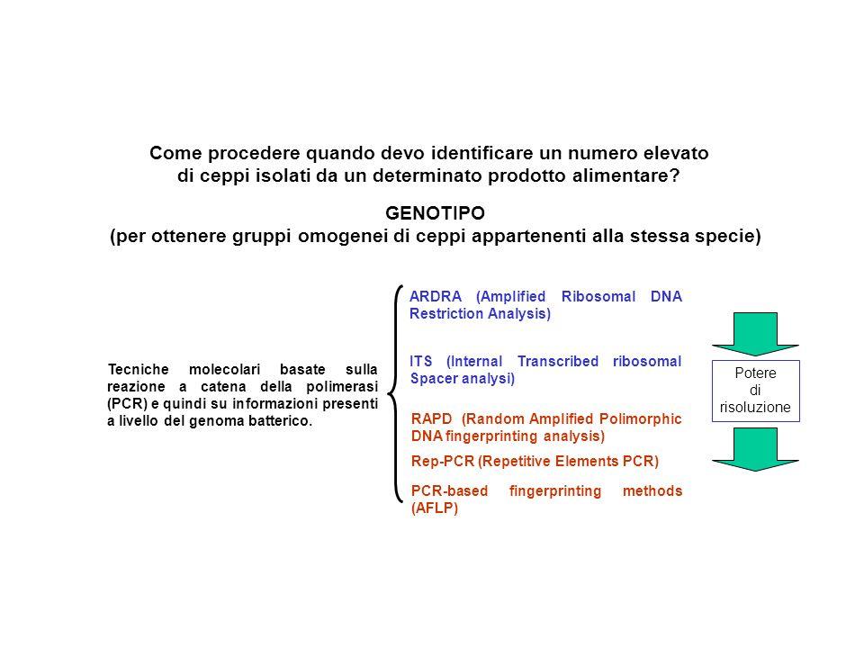 GENOTIPO (per ottenere gruppi omogenei di ceppi appartenenti alla stessa specie) Come procedere quando devo identificare un numero elevato di ceppi isolati da un determinato prodotto alimentare.