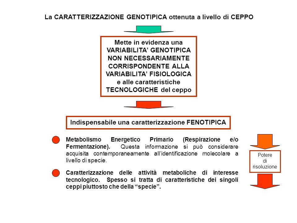 La CARATTERIZZAZIONE GENOTIPICA ottenuta a livello di CEPPO Mette in evidenza una VARIABILITA GENOTIPICA NON NECESSARIAMENTE CORRISPONDENTE ALLA VARIABILITA FISIOLOGICA e alle caratteristiche TECNOLOGICHE del ceppo Indispensabile una caratterizzazione FENOTIPICA Metabolismo Energetico Primario (Respirazione e/o Fermentazione).