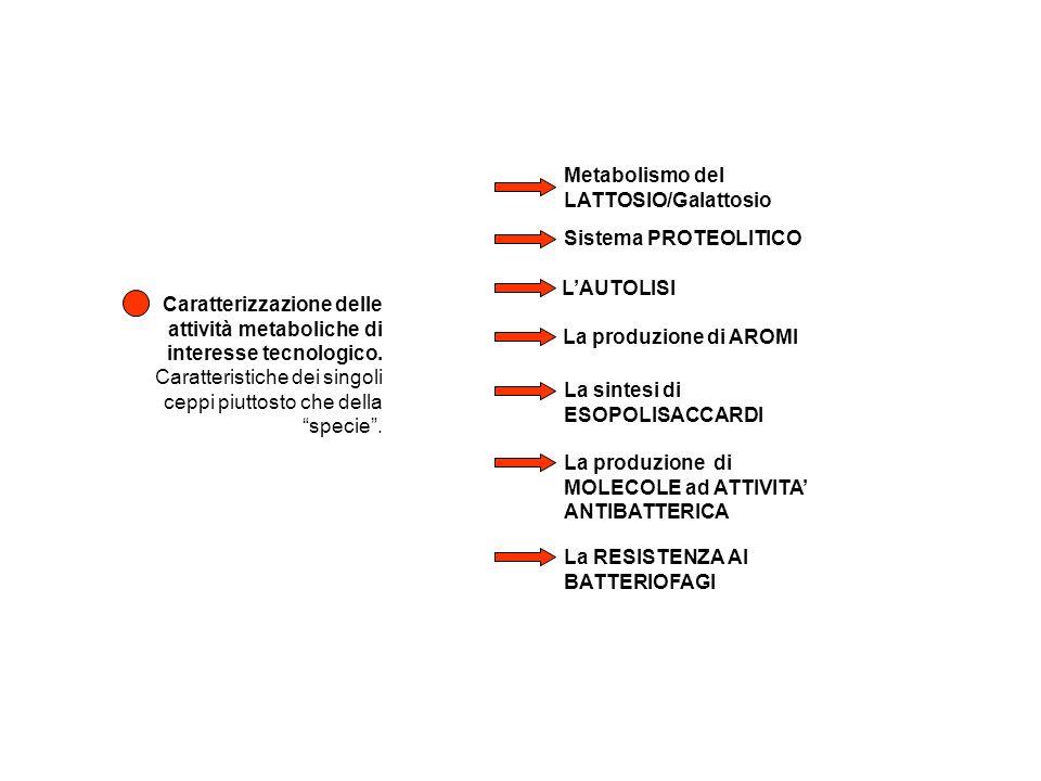 Caratterizzazione delle attività metaboliche di interesse tecnologico. Caratteristiche dei singoli ceppi piuttosto che della specie. Metabolismo del L
