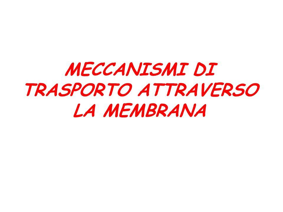 LE PROTEINE DI MEMBRANA 1) PROTEINE PERIFERICHE: proteine che si staccano dalla membrana in seguito a trattamento con reagenti polari che non distruggono il doppio strato fosfolipidico.