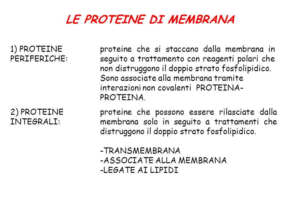 LE PROTEINE DI MEMBRANA 1) PROTEINE PERIFERICHE: proteine che si staccano dalla membrana in seguito a trattamento con reagenti polari che non distrugg