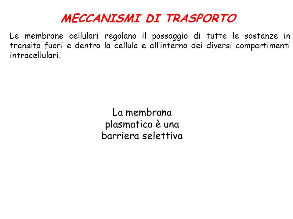 MECCANISMI DI TRASPORTO Le membrane cellulari regolano il passaggio di tutte le sostanze in transito fuori e dentro la cellula e allinterno dei divers