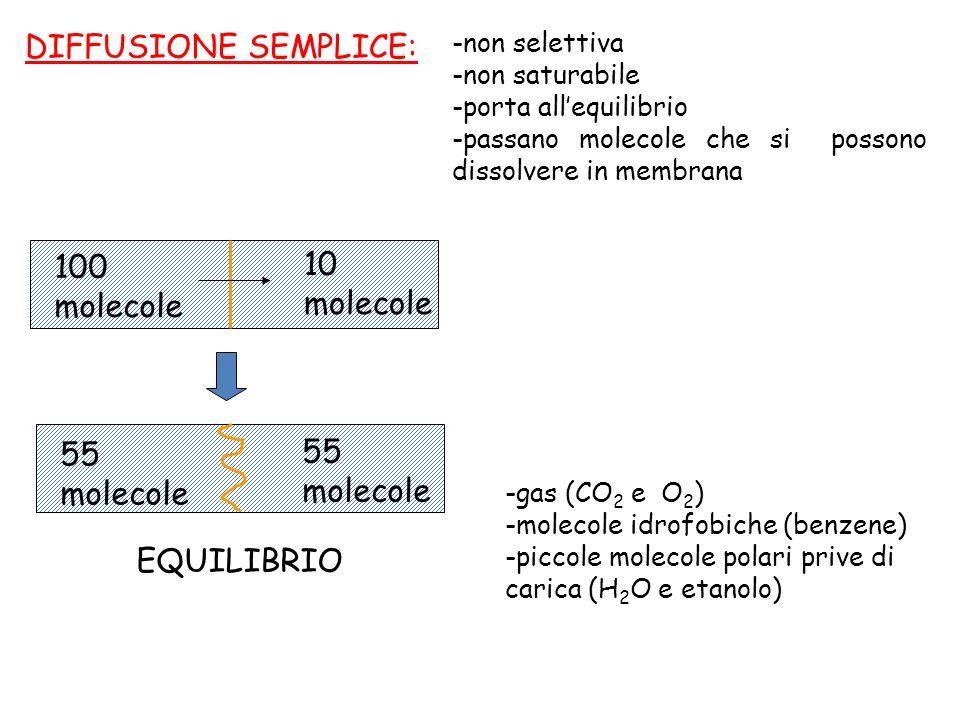 DIFFUSIONE SEMPLICE: -non selettiva -non saturabile -porta allequilibrio -passano molecole che si possono dissolvere in membrana 100 molecole 10 molec