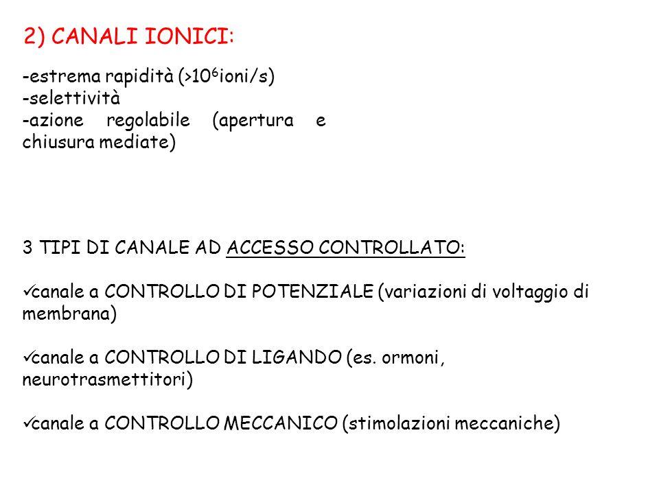 2) CANALI IONICI: -estrema rapidità (>10 6 ioni/s) -selettività -azione regolabile (apertura e chiusura mediate) 3 TIPI DI CANALE AD ACCESSO CONTROLLA