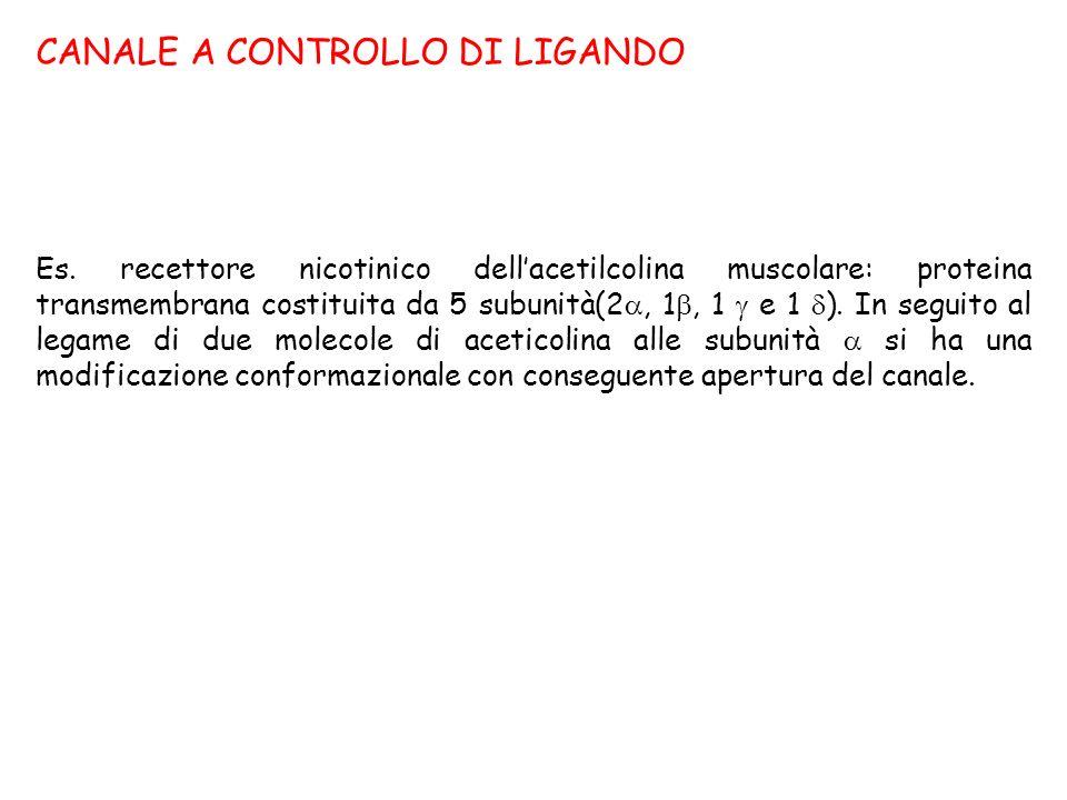 CANALE A CONTROLLO DI LIGANDO Es. recettore nicotinico dellacetilcolina muscolare: proteina transmembrana costituita da 5 subunità(2, 1, 1 e 1 ). In s