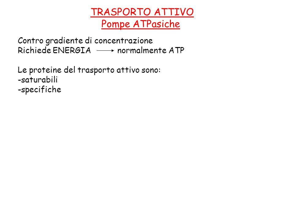 TRASPORTO ATTIVO Pompe ATPasiche Contro gradiente di concentrazione Richiede ENERGIA normalmente ATP Le proteine del trasporto attivo sono: -saturabil