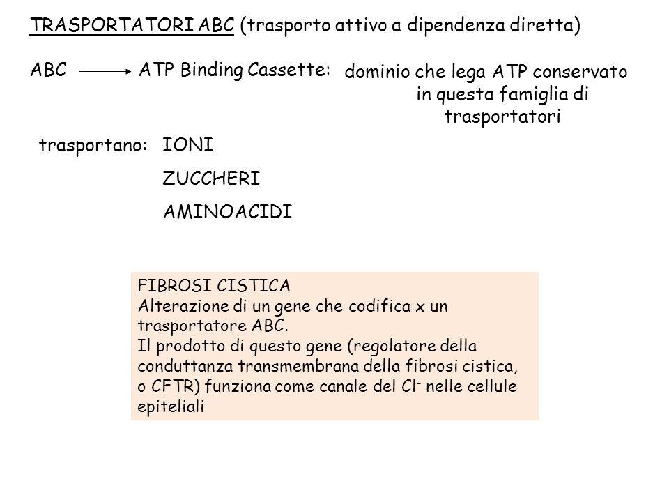 TRASPORTATORI ABC (trasporto attivo a dipendenza diretta) ABC ATP Binding Cassette: dominio che lega ATP conservato in questa famiglia di trasportator