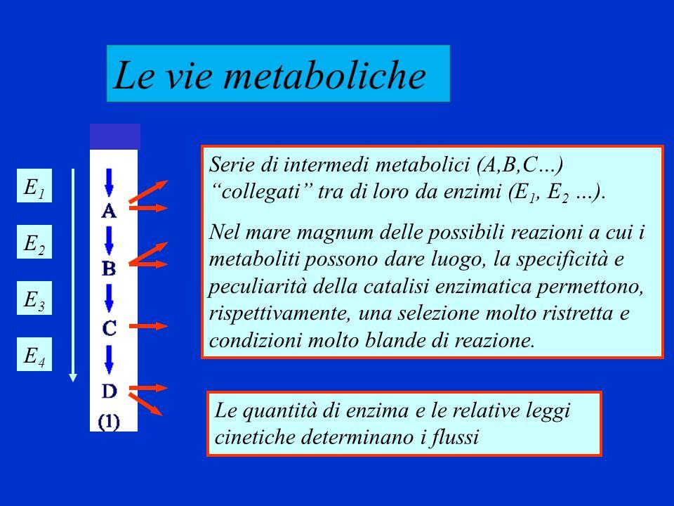 Come descrivo in termini quantitativi una via metabolica.