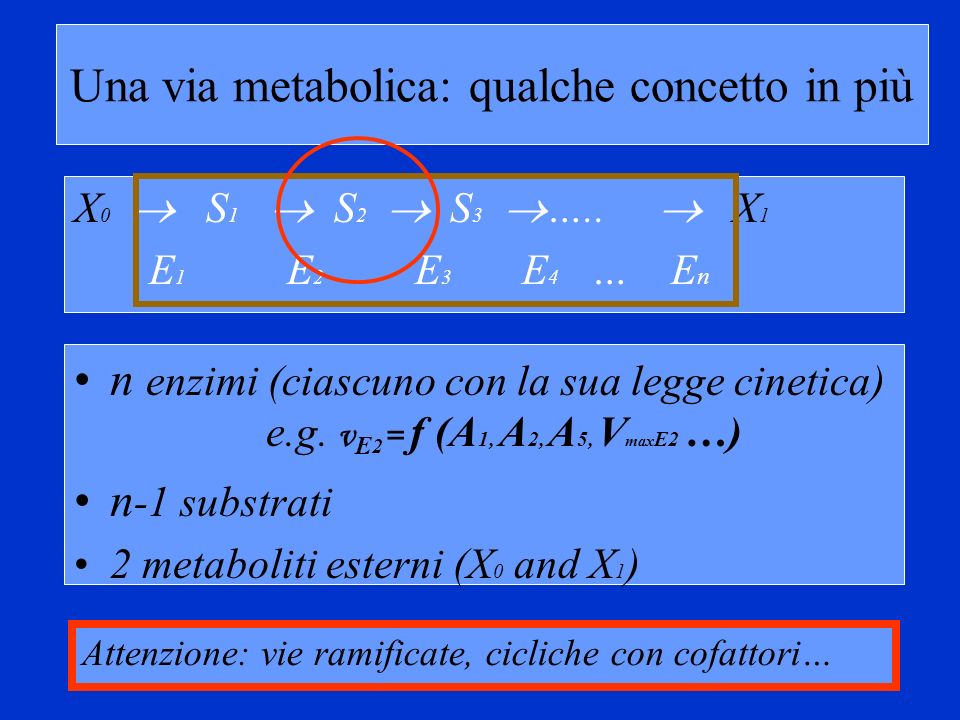Teorema della somma A moment s reflection should show that such a change is equivalent to changing the time scale of the measurements: thus it should change all steady-state fluxes through the system by exactly a factor of α.