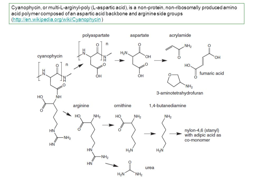 Cyanophycin, or multi-L-arginyl-poly (L-aspartic acid), is a non-protein, non-ribosomally produced amino acid polymer composed of an aspartic acid backbone and arginine side groups (http://en.wikipedia.org/wiki/Cyanophycin )http://en.wikipedia.org/wiki/Cyanophycin