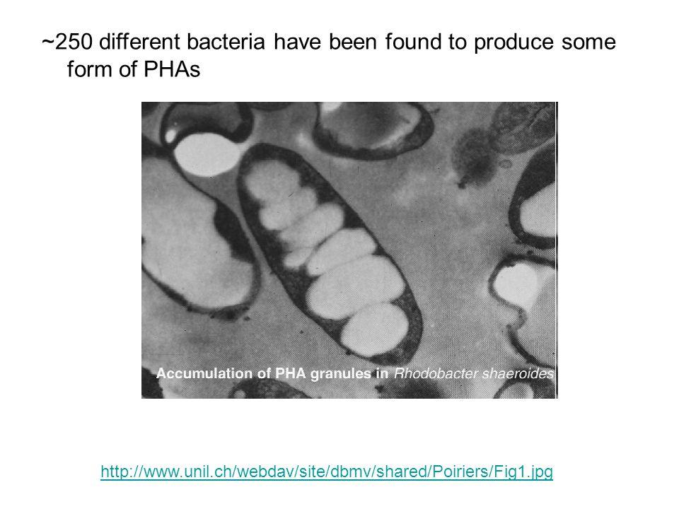 Bohmert-Tatarev et al., (2011) Plant Physiology 155:1690–1708.
