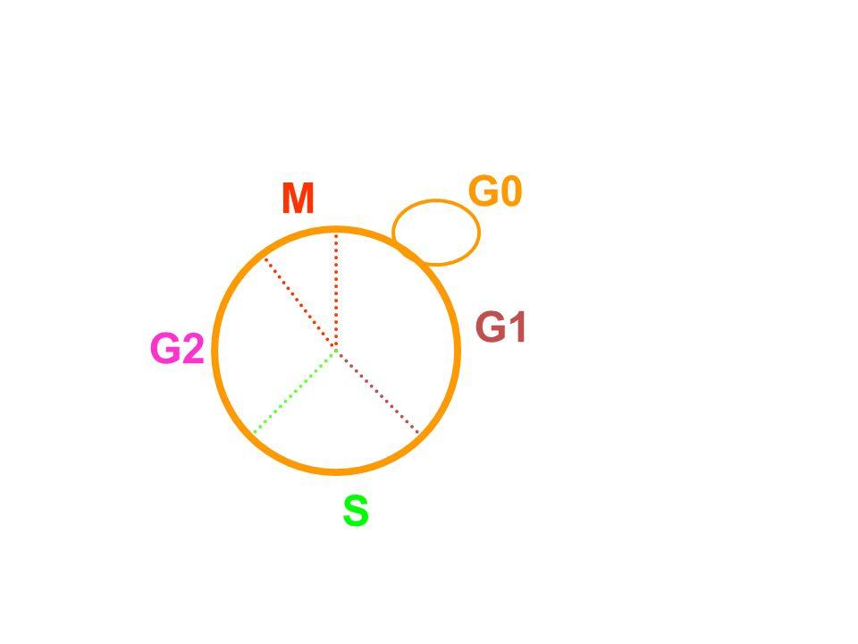 M G1 S G2 G0