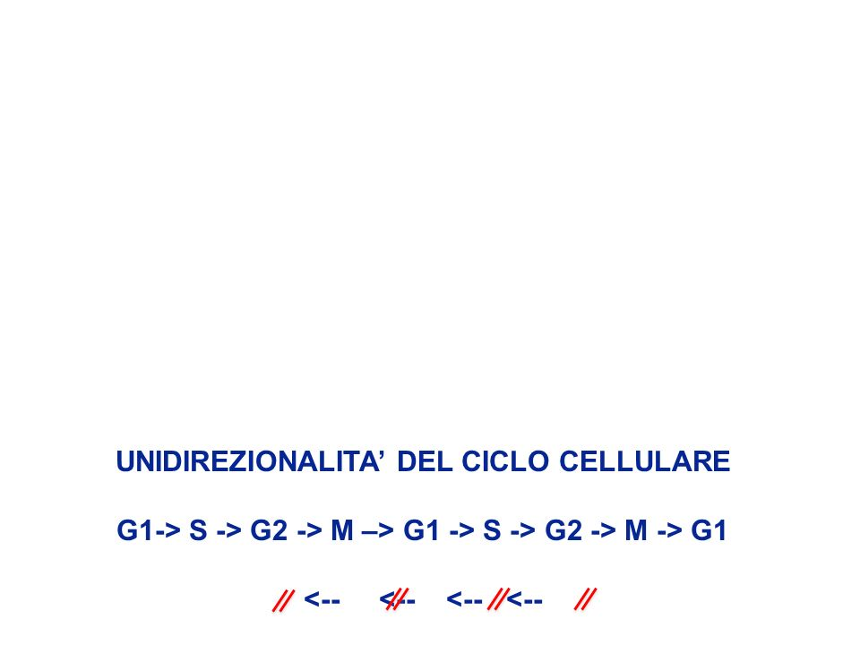 UNIDIREZIONALITA DEL CICLO CELLULARE G1-> S -> G2 -> M –> G1 -> S -> G2 -> M -> G1 <-- <--