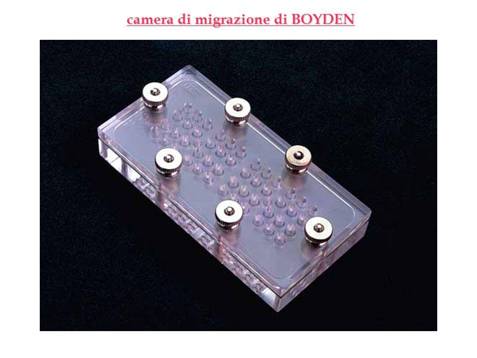 camera di migrazione di BOYDEN