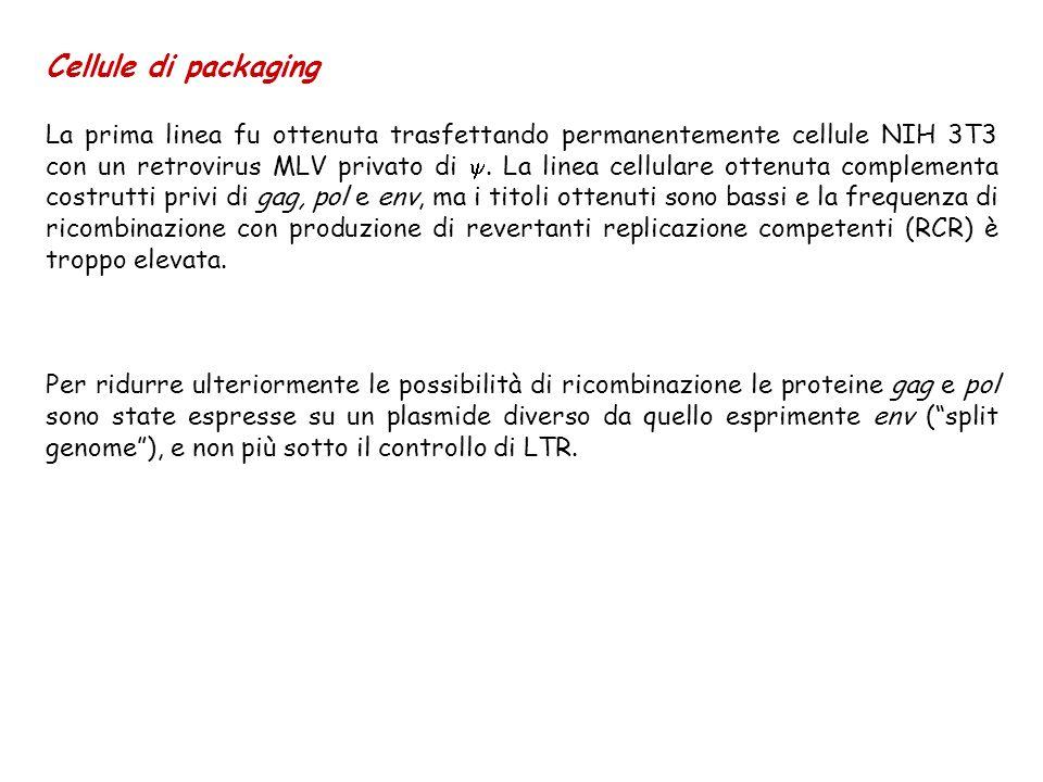 Cellule di packaging La prima linea fu ottenuta trasfettando permanentemente cellule NIH 3T3 con un retrovirus MLV privato di. La linea cellulare otte