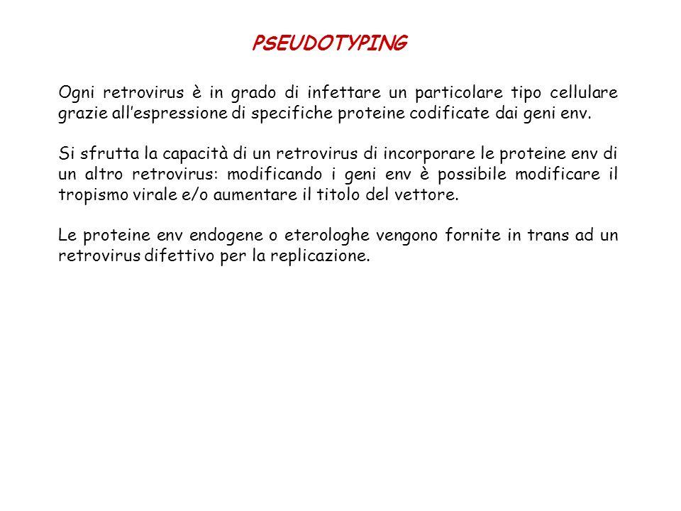 PSEUDOTYPING Ogni retrovirus è in grado di infettare un particolare tipo cellulare grazie allespressione di specifiche proteine codificate dai geni en