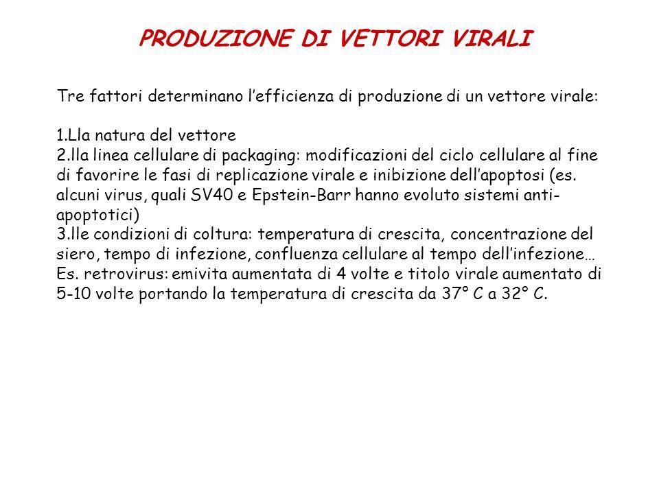 PRODUZIONE DI VETTORI VIRALI Tre fattori determinano lefficienza di produzione di un vettore virale: 1.Lla natura del vettore 2.lla linea cellulare di