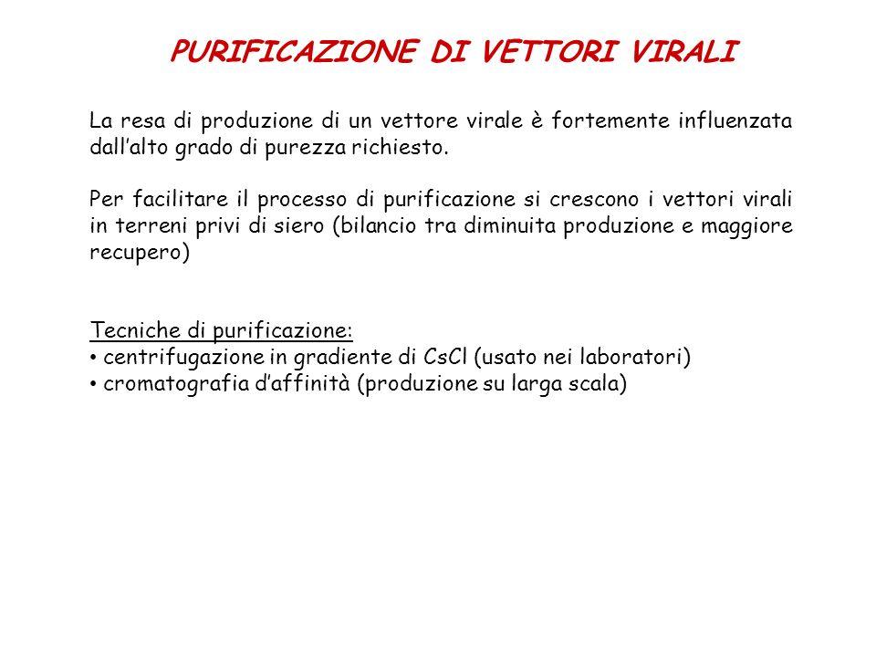 PURIFICAZIONE DI VETTORI VIRALI La resa di produzione di un vettore virale è fortemente influenzata dallalto grado di purezza richiesto. Per facilitar