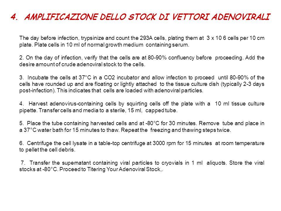 4.AMPLIFICAZIONE DELLO STOCK DI VETTORI ADENOVIRALI The day before infection, trypsinize and count the 293A cells, plating them at 3 x 10 6 cells per