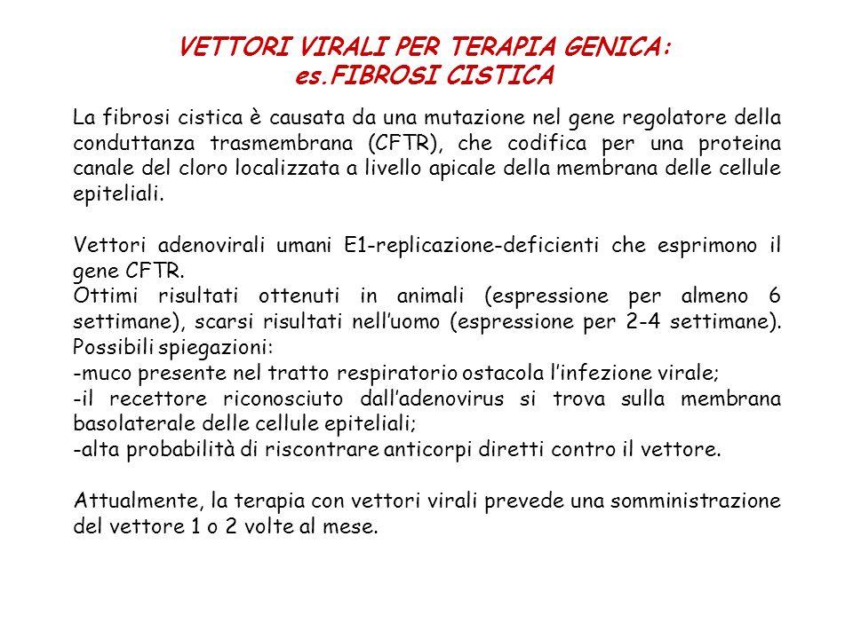 VETTORI VIRALI PER TERAPIA GENICA: es.FIBROSI CISTICA La fibrosi cistica è causata da una mutazione nel gene regolatore della conduttanza trasmembrana
