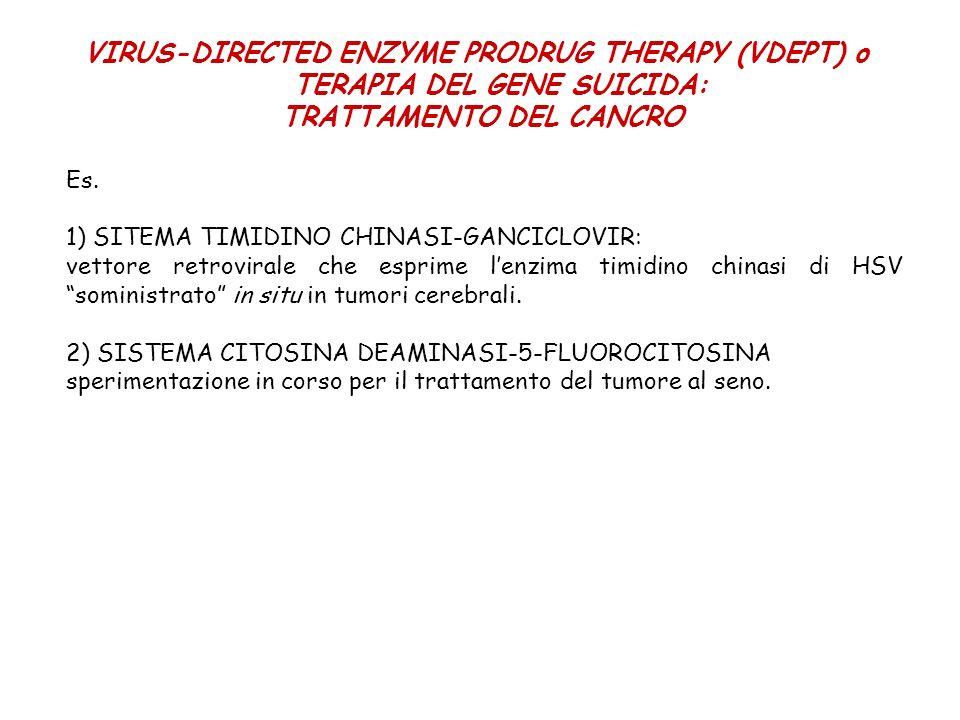 VIRUS-DIRECTED ENZYME PRODRUG THERAPY (VDEPT) o TERAPIA DEL GENE SUICIDA: TRATTAMENTO DEL CANCRO Es. 1) SITEMA TIMIDINO CHINASI-GANCICLOVIR: vettore r