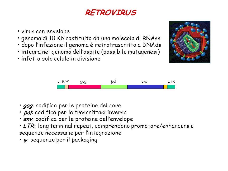 RETROVIRUS virus con envelope genoma di 10 Kb costituito da una molecola di RNAss dopo linfezione il genoma è retrotrascritto a DNAds integra nel geno