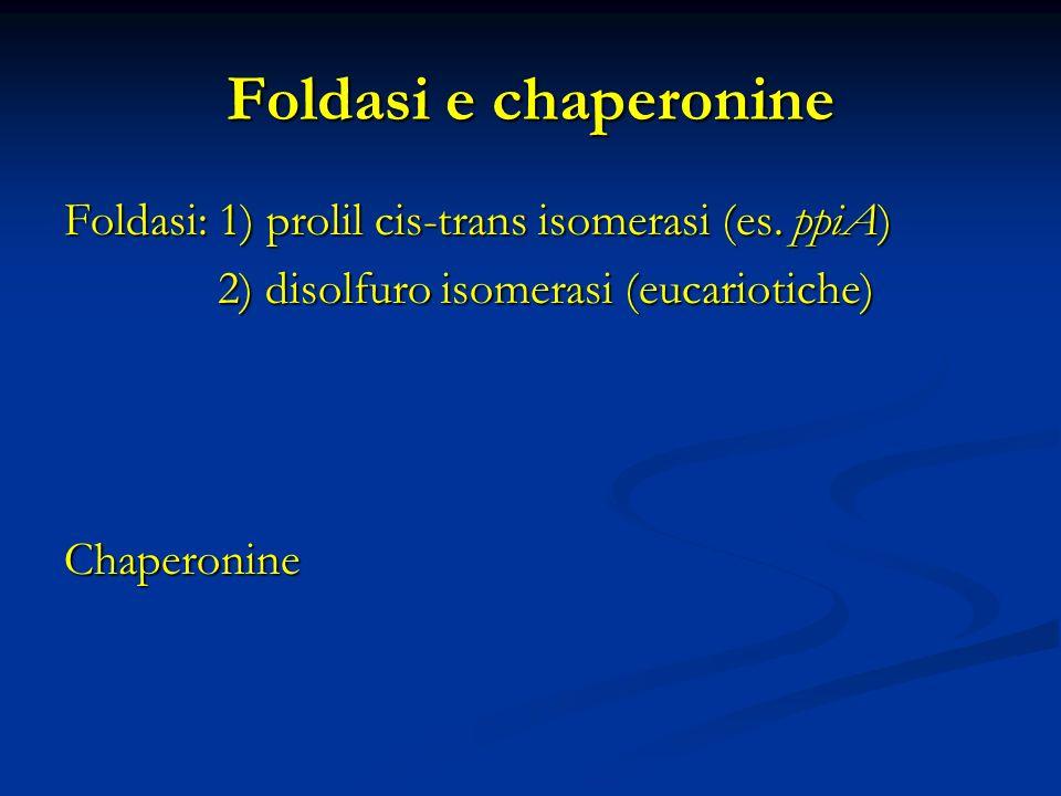 Foldasi e chaperonine Foldasi: 1) prolil cis-trans isomerasi (es. ppiA) 2) disolfuro isomerasi (eucariotiche) 2) disolfuro isomerasi (eucariotiche)Cha