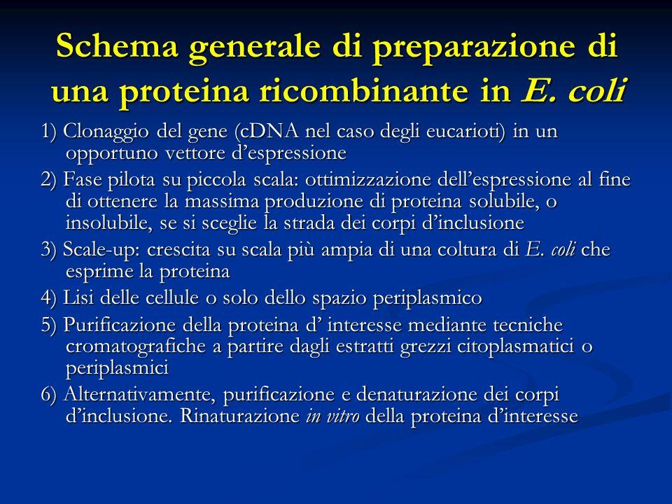 Schema generale di preparazione di una proteina ricombinante in E. coli 1) Clonaggio del gene (cDNA nel caso degli eucarioti) in un opportuno vettore