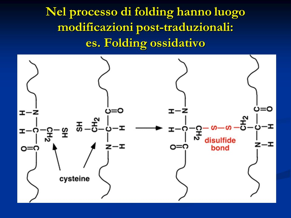 Schema generale di preparazione di una proteina ricombinante in E.