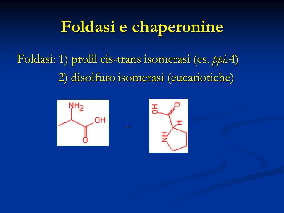 Foldasi e chaperonine Foldasi: 1) prolil cis-trans isomerasi (es. ppiA) 2) disolfuro isomerasi (eucariotiche) 2) disolfuro isomerasi (eucariotiche) +