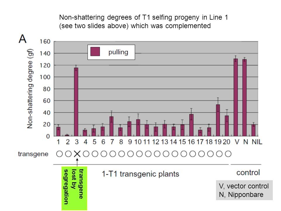 Temperate japonica cultivars of Chinese origin Selection for the qSH1 allele was not as intense nor as expansive as selection for the sh4 allele, as qSH1 is not fixed, even within the temperate japonica subpopulation, let alone the whole of O.