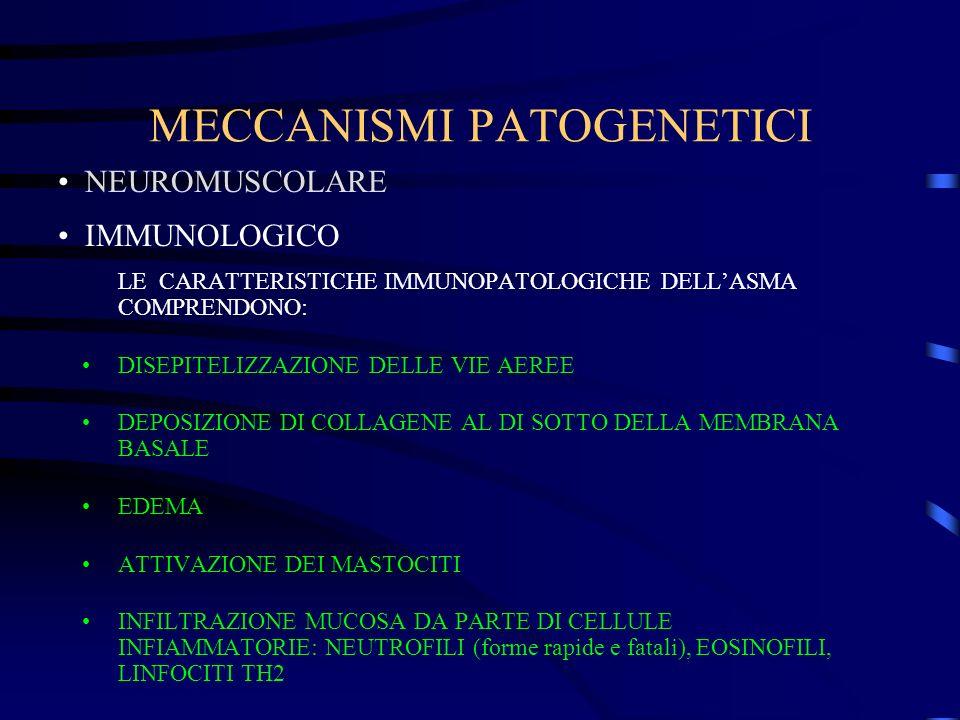 MECCANISMI PATOGENETICI LE CARATTERISTICHE IMMUNOPATOLOGICHE DELLASMA COMPRENDONO: DISEPITELIZZAZIONE DELLE VIE AEREE DEPOSIZIONE DI COLLAGENE AL DI S