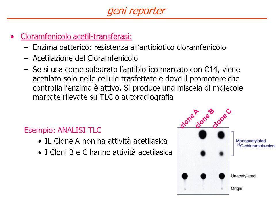 Cloramfenicolo acetil-transferasi:Cloramfenicolo acetil-transferasi: –Enzima batterico: resistenza allantibiotico cloramfenicolo –Acetilazione del Clo