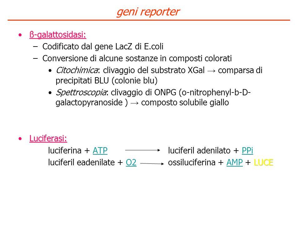 ß-galattosidasi:ß-galattosidasi: –Codificato dal gene LacZ di E.coli –Conversione di alcune sostanze in composti colorati Citochimica: clivaggio del s