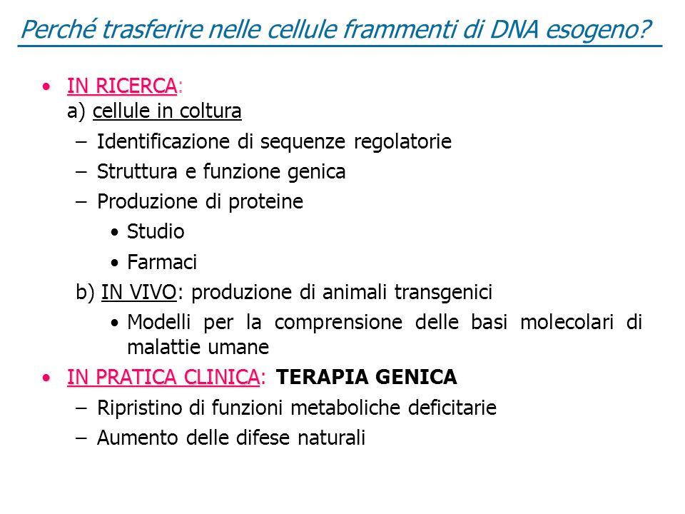 Perché trasferire nelle cellule frammenti di DNA esogeno? IN RICERCAIN RICERCA: a) cellule in coltura –Identificazione di sequenze regolatorie –Strutt