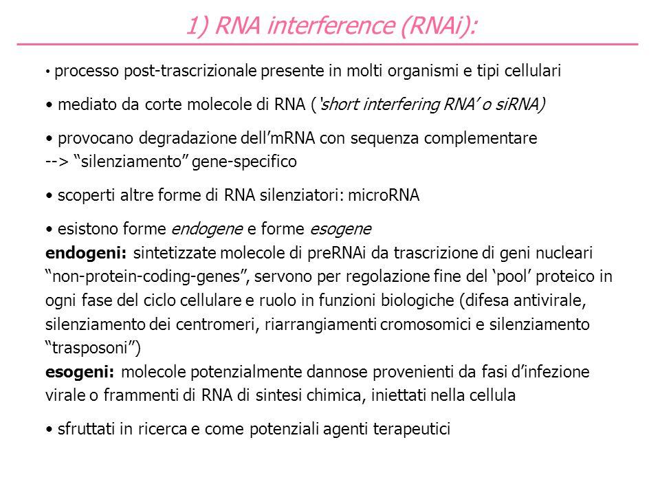 processo post-trascrizionale presente in molti organismi e tipi cellulari mediato da corte molecole di RNA (short interfering RNA o siRNA) provocano d
