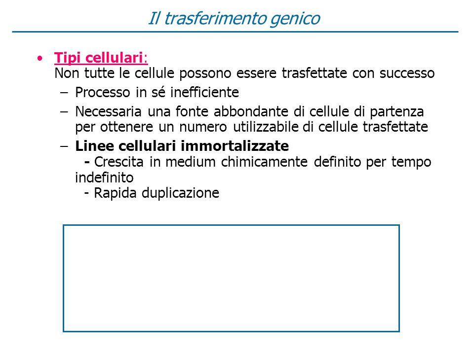 Il trasferimento genico Tipi cellulari: Non tutte le cellule possono essere trasfettate con successo –Processo in sé inefficiente –Necessaria una font
