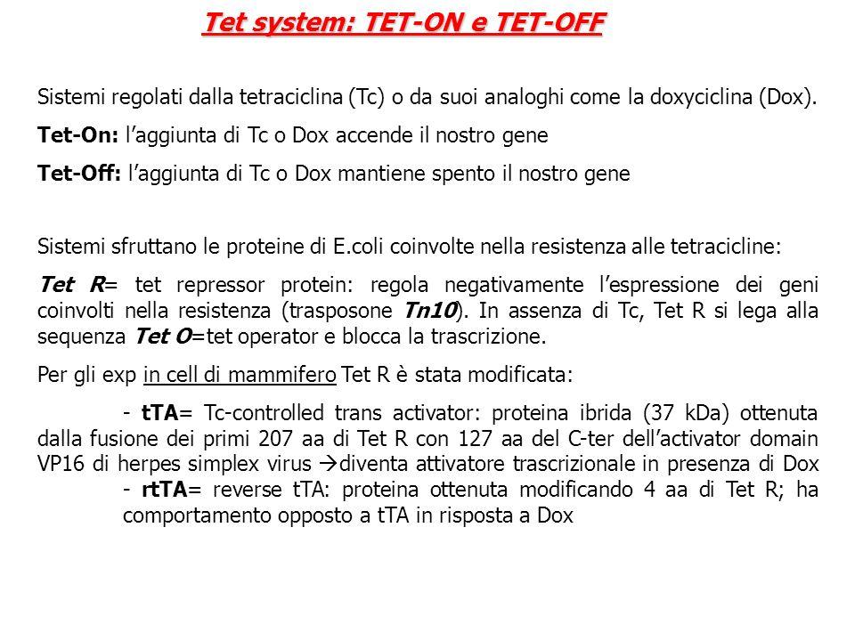 Sistemi regolati dalla tetraciclina (Tc) o da suoi analoghi come la doxyciclina (Dox). Tet-On: laggiunta di Tc o Dox accende il nostro gene Tet-Off: l