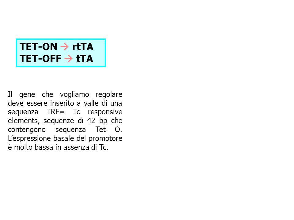 TET-ON rtTA TET-OFF tTA Il gene che vogliamo regolare deve essere inserito a valle di una sequenza TRE= Tc responsive elements, sequenze di 42 bp che