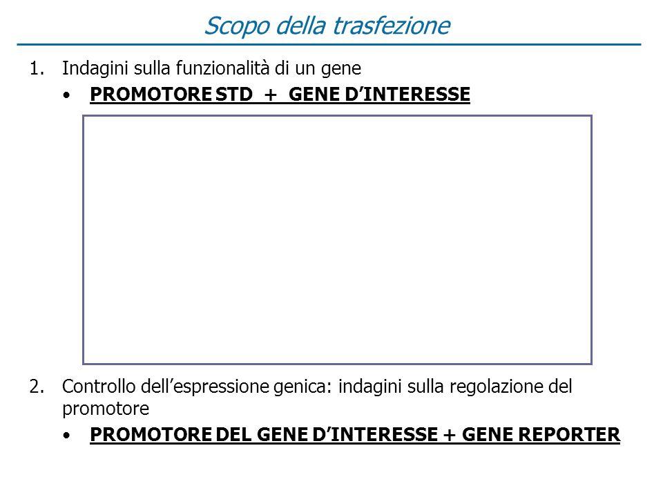 1.Indagini sulla funzionalità di un gene PROMOTORE STD + GENE DINTERESSE 2.Controllo dellespressione genica: indagini sulla regolazione del promotore