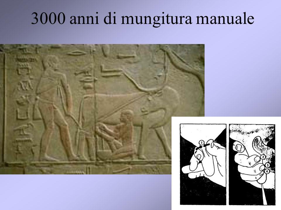 7 3000 anni di mungitura manuale